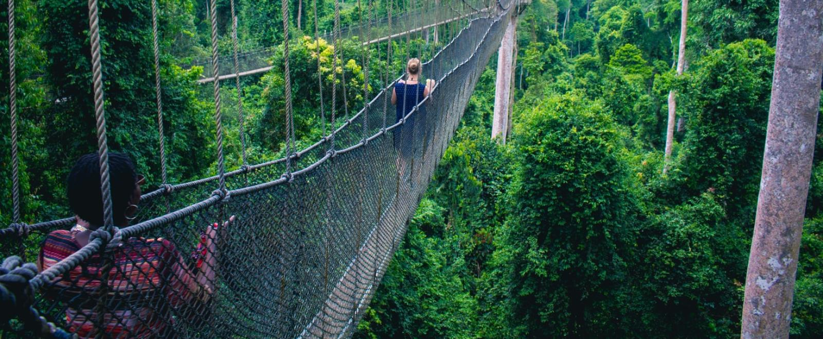 Visitors walk along the canopy bridge in Ghana's rainforest